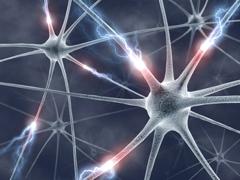 cropped-neurona1